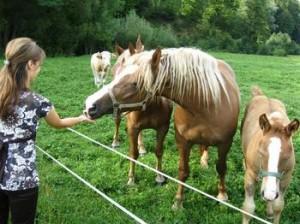 konji_na_turisticni_kmetiji